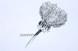 нарисовать пошагово цветок чертополоха карандашом, рисунок  цветка чертополоха, контурный рисунок,  черно-белый