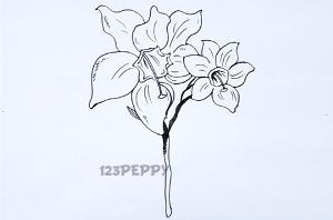 нарисовать пошагово амазонскую лилию карандашом, рисунок  амазонской лилии, контурный рисунок,  черно-белый