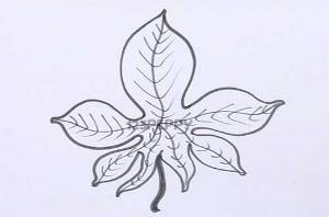 нарисовать пошагово осенний лист карандашом, рисунок  осеннего листа, контурный рисунок,  черно-белый
