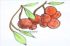 нарисовать пошагово барбарис карандашом, рисунок  барбариса, контурный рисунок,  цветной