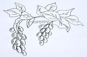 нарисовать пошагово кисть винограда карандашом, рисунок  кисти винограда, контурный рисунок,  черно-белый