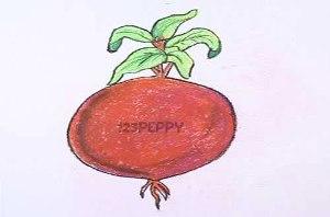 нарисовать пошагово свеклу карандашом, рисунок  свеклы, контурный рисунок,  цветной