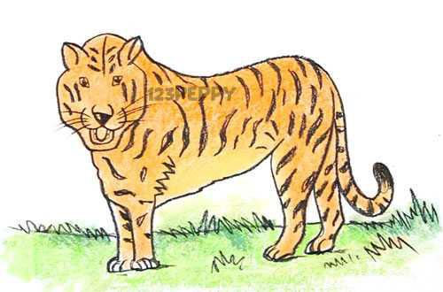 Рисунок о бенгальском тигре