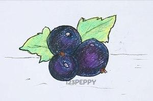 нарисовать пошагово черную смородину карандашом, рисунок  черной смородины, контурный рисунок,  цветной
