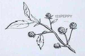 нарисовать пошагово черную малину карандашом, рисунок  черной малины, контурный рисунок,  черно-белый