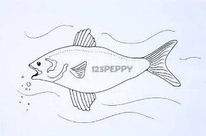 нарисовать пошагово длинную рыбку карандашом, рисунок  длинной рыбки, контурный рисунок,  черно-белый