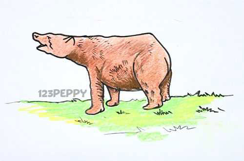 нарисовать пошагово бурого медведя карандашом, рисунок  бурого медведя, контурный рисунок,  цветной