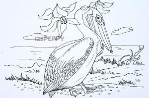 нарисовать пошагово пеликана карандашом, рисунок  пеликана, контурный рисунок,  черно-белый