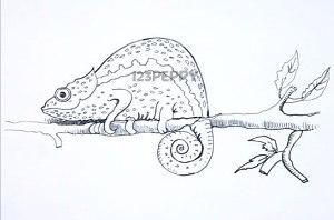нарисовать пошагово хамелеона на ветке карандашом, рисунок  хамелеона, контурный рисунок,  черно-белый