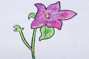 нарисовать пошагово сиреневый цветок карандашом, рисунок  сиреневого цветка, контурный рисунок,  цветной