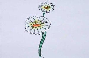 нарисовать пошагово хризантему карандашом, рисунок  хризантемы, контурный рисунок,
