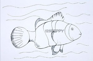нарисовать пошагово рыбку-клоуна карандашом, рисунок  рыбки-клоуна, контурный рисунок,  цветной