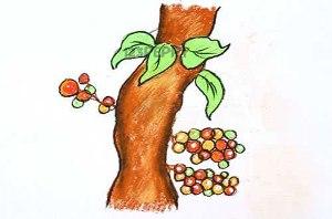 нарисовать пошагово плоды смоковницы карандашом, рисунок  плодов смаковницы, контурный рисунок,  цветной
