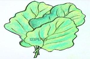 нарисовать пошагово листовую капусту карандашом, рисунок  листовой капусты, контурный рисунок,  цветной