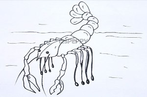 нарисовать пошагово рака карандашом, рисунок  рака, контурный рисунок,  черно-белый