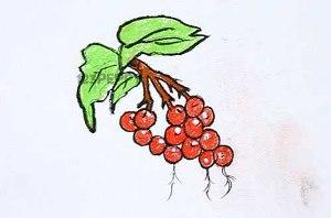 нарисовать пошагово смородину карандашом, рисунок  смородины, контурный рисунок,  цветной