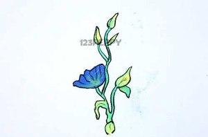 нарисовать пошагово синий цветок карандашом, рисунок  синего цветка, контурный рисунок,  цветной