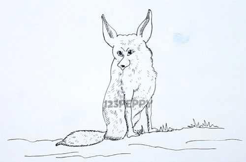 нарисовать пошагово лису карандашом, рисунок  лисы, контурный рисунок,  черно- белый