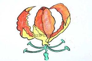 нарисовать пошагово огненную лилию карандашом, рисунок  огненной лилии, контурный рисунок,  цветной
