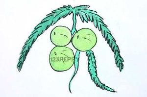нарисовать пошагово плоды крыжовника карандашом, рисунок  плодов крыжовника, контурный рисунок,