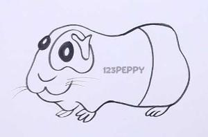 нарисовать пошагово морскую свинку карандашом, рисунок  морской свинки, контурный рисунок,  черно-белый