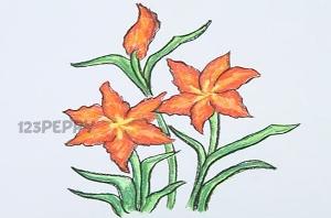 нарисовать пошагово цветы — звездочки карандашом, рисунок  цветов звездочек, контурный рисунок,  цветной