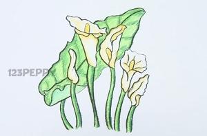 нарисовать пошагово красивые белые цветы карандашом, рисунок  красивых белых цветов, контурный рисунок,  цветной