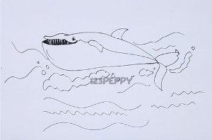 нарисовать пошагово усатого кита карандашом, рисунок  усатого кита, контурный рисунок,  черно-белый