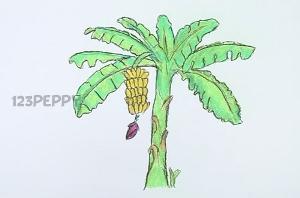 нарисовать пошагово банановую пальму карандашом, рисунок  банановой пальмы, контурный рисунок,  цветной