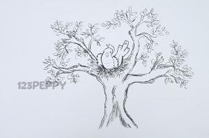 нарисовать пошагово гнездо на дереве с птицей карандашом, рисунок  гнезда на дереве с птицей, контурный рисунок,  черно - белый