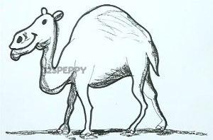 нарисовать пошагово веблюда карандашом, рисунок  верблюда, контурный рисунок,  черно- белый