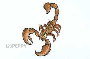 нарисовать пошагово скорпиона карандашом, рисунок  скорпиона, контурный рисунок,  цветной