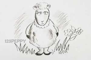 нарисовать пошагово овцу карандашом, рисунок  овцы, контурный рисунок,  черно- белый