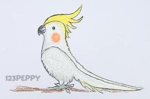 нарисовать пошагово австралийского попугая карандашом, рисунок  австралийского попугая, контурный рисунок,  цветной