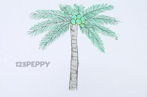 нарисовать пошагово пальму с кокосами карандашом, рисунок  пальмы с кокосами, контурный рисунок,  цветной