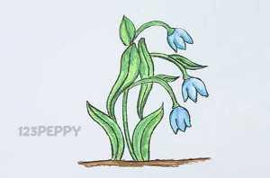 нарисовать пошагово цветы крокус карандашом, рисунок  цветка крокуса, контурный рисунок,  цветной