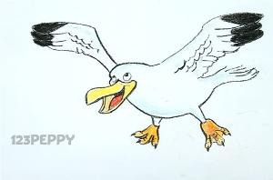 нарисовать пошагово чайку карандашом, рисунок  чайки, контурный рисунок,  цветной