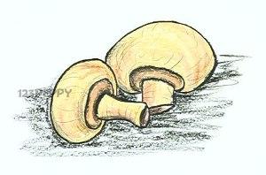 нарисовать пошагово грибы шампиньоны карандашом, рисунок  грибов, шампиньонов, контурный рисунок,  цветной
