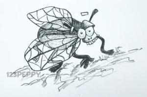 нарисовать пошагово забавную муху карандашом, рисунок  забавной мухи, контурный рисунок,  черно- белый