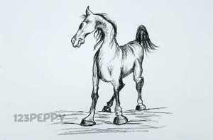 нарисовать пошагово коня карандашом, рисунок  коня, контурный рисунок,  черно- белый