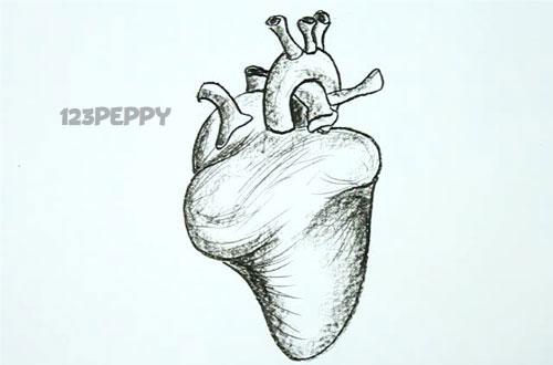 нарисовать пошагово человеческое сердце карандашом, рисунок  человеческого сердца, контурный рисунок,  черно - белый