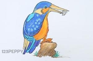 нарисовать пошагово красивую птицу карандашом, рисунок  красивой птицы, контурный рисунок,  цветной