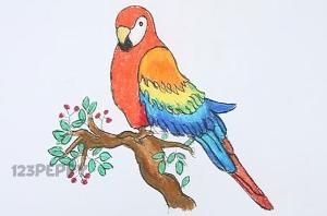 нарисовать пошагово попугая ара карандашом, рисунок  попугая ара, контурный рисунок,  цветной