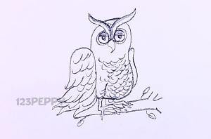 нарисовать пошагово сову карандашом, рисунок  совы, контурный рисунок,  черно - белый