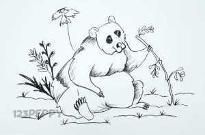 нарисовать пошагово панду карандашом, рисунок  панды, контурный рисунок,  черно- белый