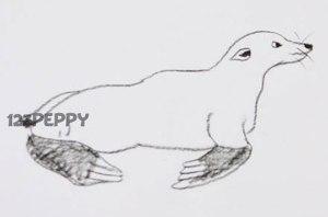 нарисовать пошагово тюленя карандашом, рисунок  тюленя, контурный рисунок,  черно-белый