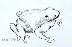 Как нарисовать жабу поэтапно или пошагово карандашом. Видео | Как ...
