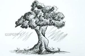 нарисовать пошагово большое дерево карандашом, рисунок  большого дерева, контурный рисунок,  черно - белый