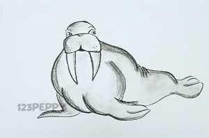 нарисовать пошагово моржа карандашом, рисунок  моржа, контурный рисунок,  черно-белый