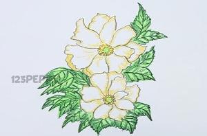 нарисовать пошагово белые цветы карандашом, рисунок  белых цветов, контурный рисунок,  цветной